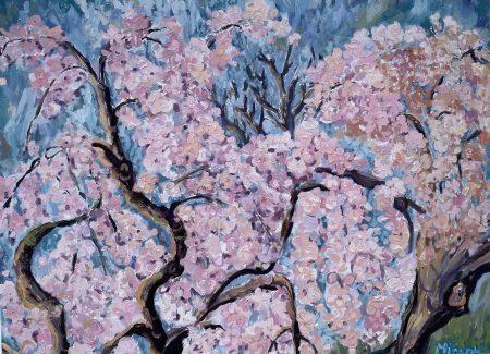 Sakura VII